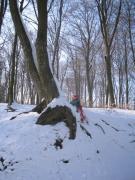 Téi séta az erdőben