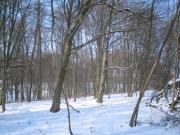 Téli séta az erdőben
